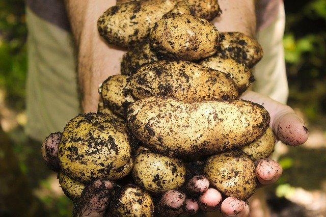 Cette semaine, Sébastien et moi même sommes heureux de vous proposer les toutes premières pommes de terre nouvelles en exclusivité dans le grand panier à la Ferme reymann 68 Raedersheim (Alsace)