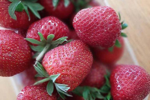SURPRISE ! Contrairement à ce qui est annoncé sur le catalogue, les fraises seront ALSACIENNES cette semaine. ☀😁😉 Vite, il vous reste encore un peu de temps pour réserver. Fermeture des ventes à 12h ce jour !