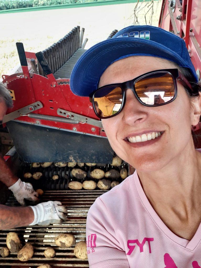 récolte de pomme de terre nouvelles